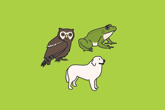 91 animals