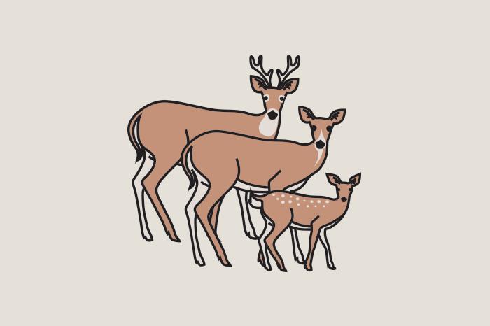 113 animal families