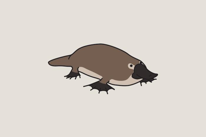 113 australian animals