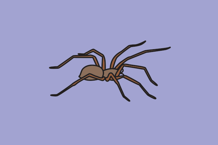 117 spiders