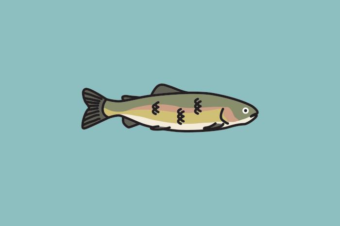 117 fishing